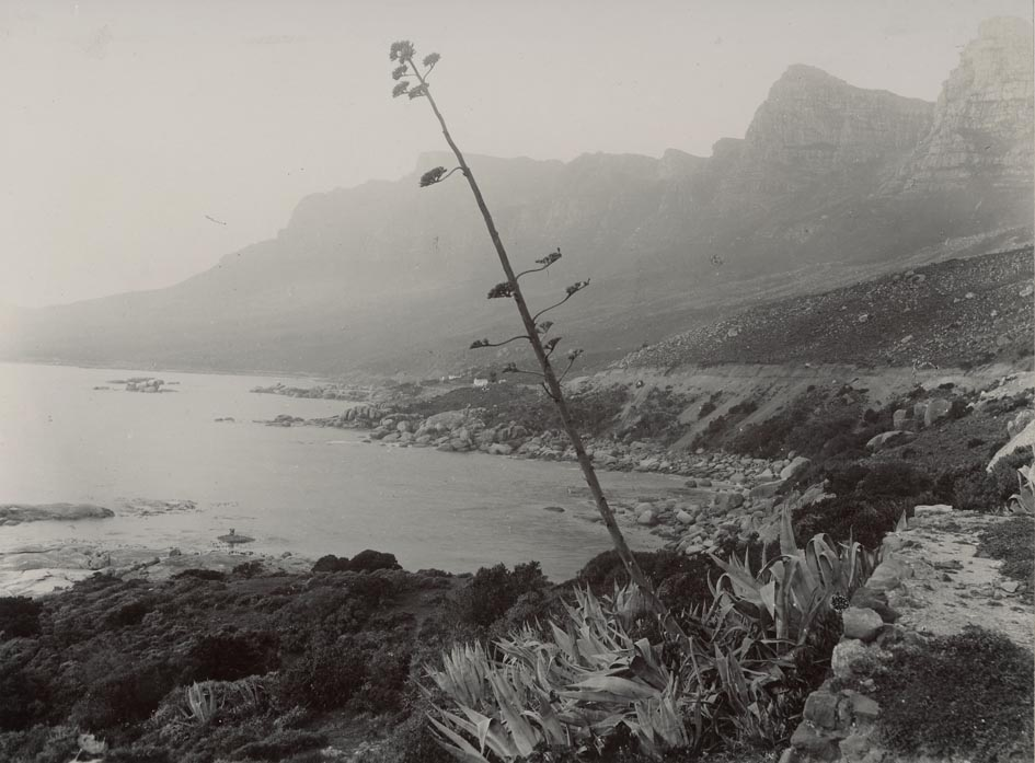 CAPE TOWN. - Bay and Table Mountain.