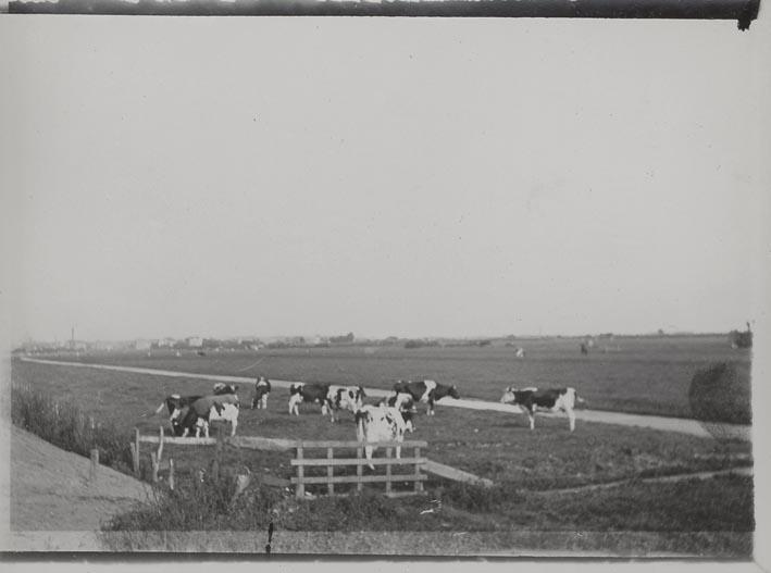 DIEMEN. - Weiland met koeien